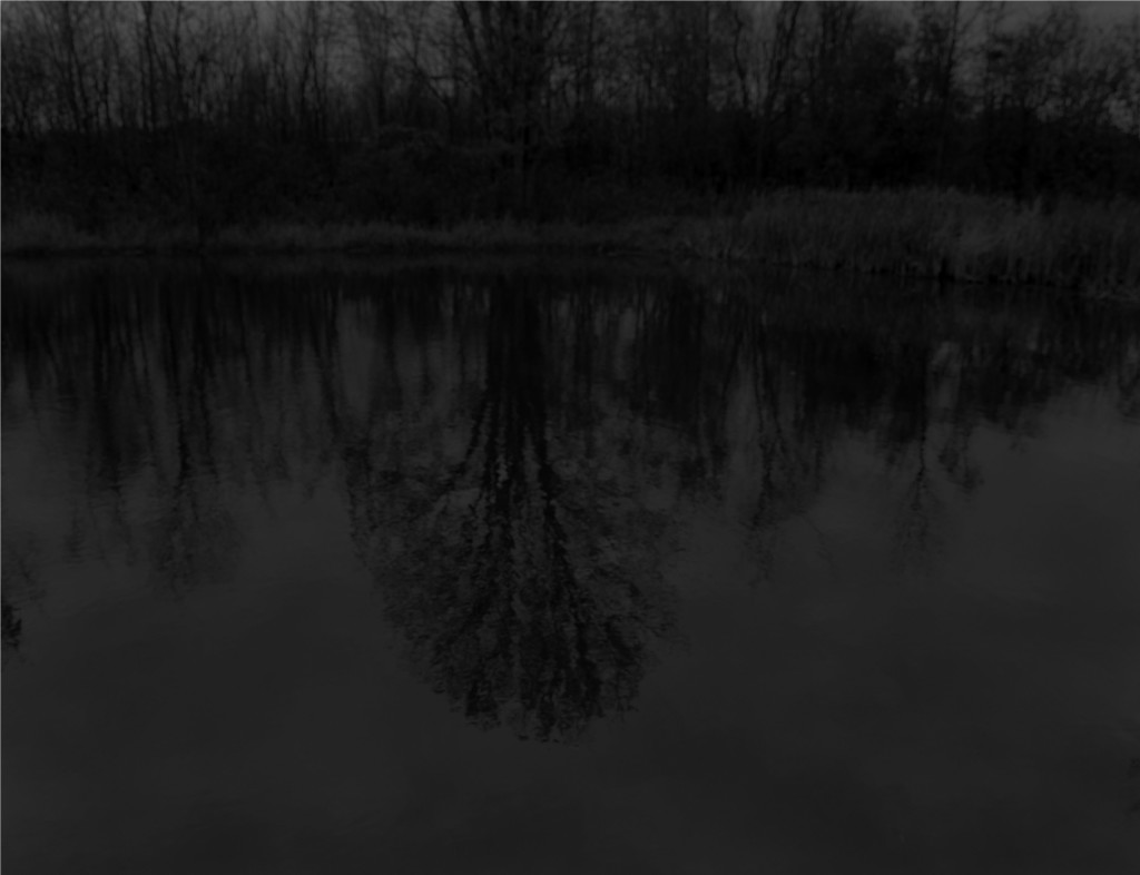 Dawoud Bey, Untitled #13 (Trees and Reflection), 2017. 48 x 54 inches, Gelatin silver print on dibond. Courtesy of the artist, Rena Bransten Gallery, and Stephen Daiter Gallery from Night Coming Tenderly, Black.